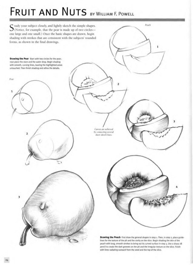 how to draw fruit how to draw an orange drawingforallnet fruit draw how to