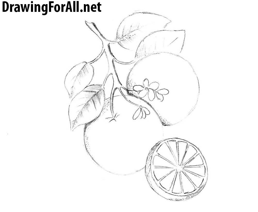 how to draw fruit mango fruit hand drawn mango fruit how to draw hands draw fruit to how