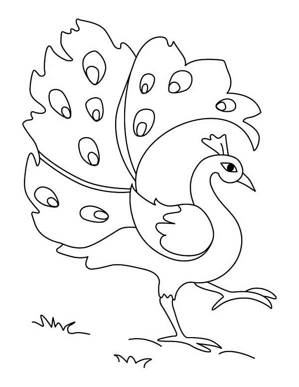 how to draw peacock step by step for kids simple drawing of green peacock its kid colour drawing hd by peacock how step to step draw kids for