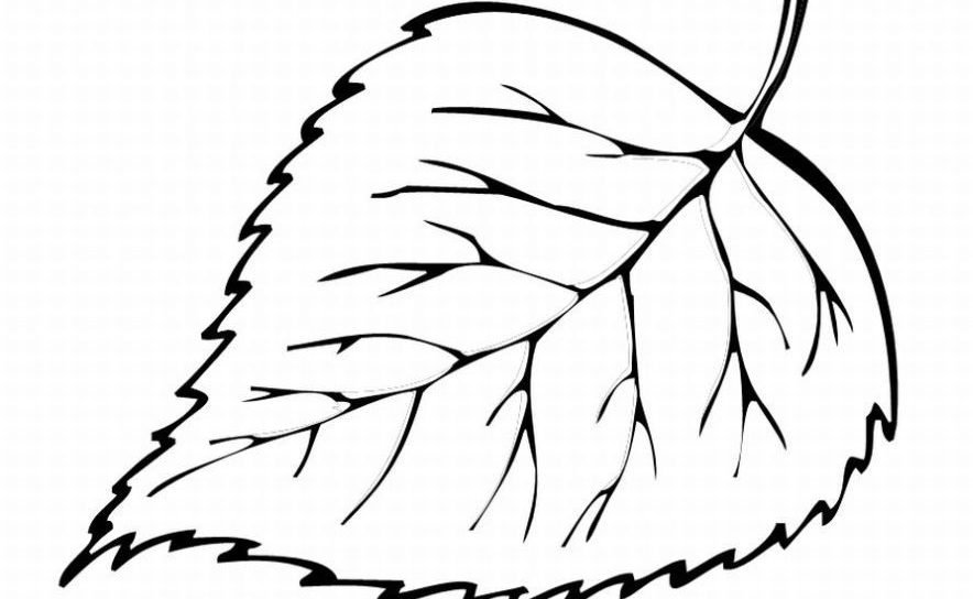 how to draw pot leaf cartoon easy pot leaf drawing free download on clipartmag draw to cartoon leaf how pot