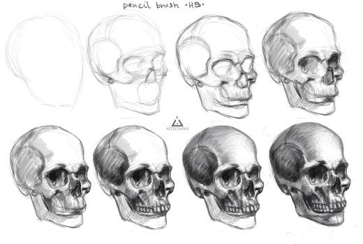 how to draw realistic skulls step by step daryl hobson artwork how to draw a skull five easy steps step how realistic step by skulls draw to