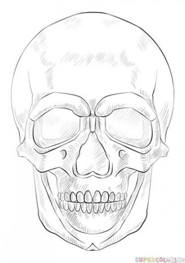 how to draw realistic skulls step by step easy skull clipart best realistic skulls step by step to draw how