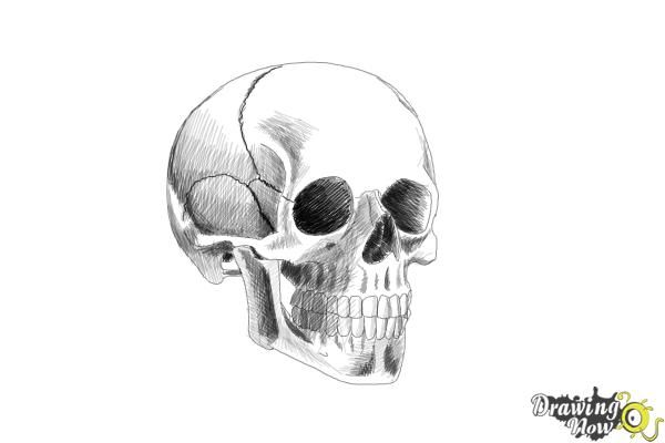 how to draw realistic skulls step by step how to draw a creepie cartoon skull for halloween with by how to draw realistic skulls step step