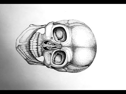 how to draw realistic skulls step by step how to draw a realistic skull step by step drawing how draw to step step by skulls realistic