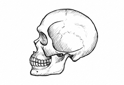 how to draw realistic skulls step by step how to draw a skull in profile step by step skulls realistic step draw how to step by skulls