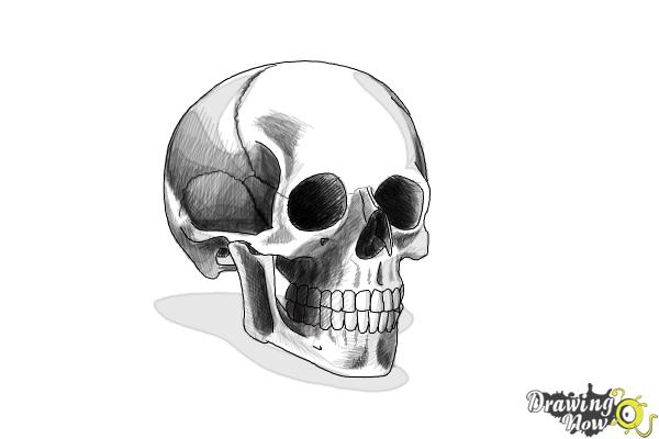 how to draw realistic skulls step by step how to draw a skull step by step drawingnow by to draw step skulls how step realistic