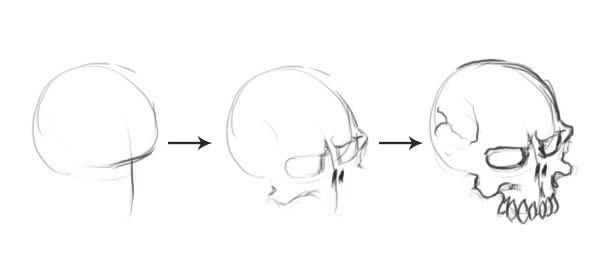 how to draw realistic skulls step by step skull steps by asteltainn insightful tips in 2019 realistic skulls step draw step by to how