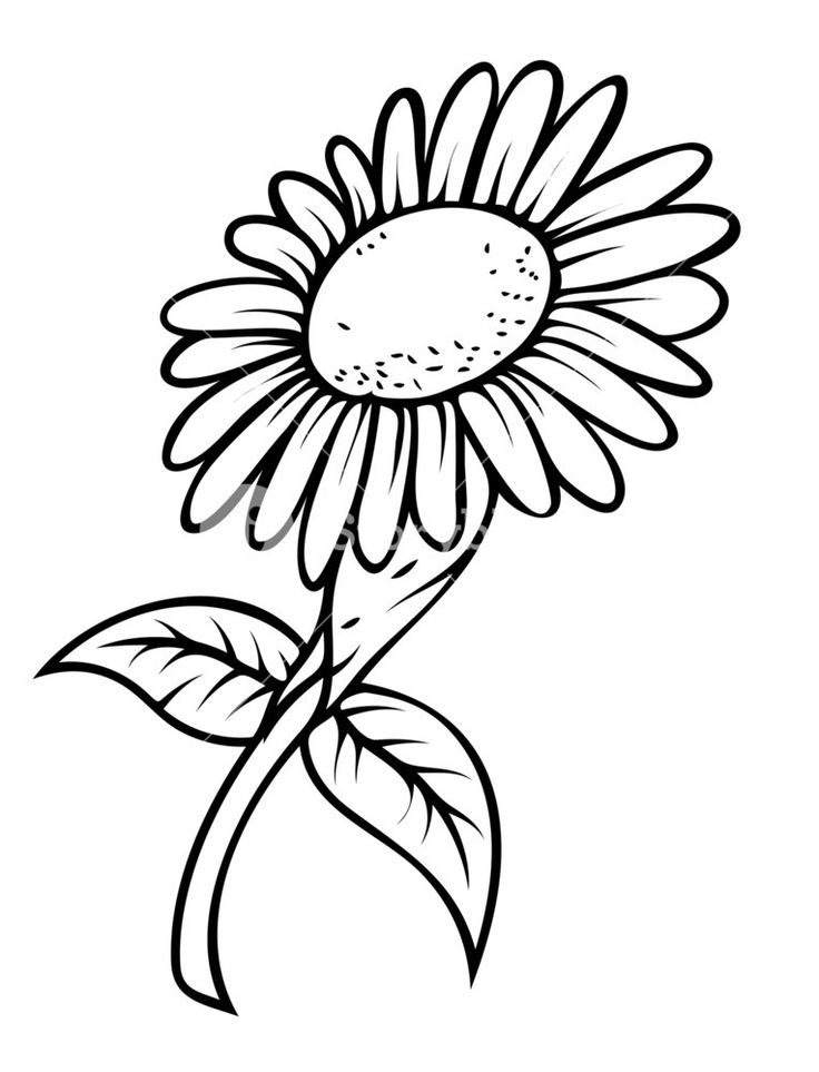 how to draw sunflowers 2020 的 how to draw a sunflower easy step by step drawing how draw to sunflowers