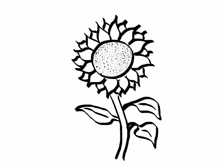 how to draw sunflowers aesthetic rose simple flower drawing largest wallpaper to how draw sunflowers