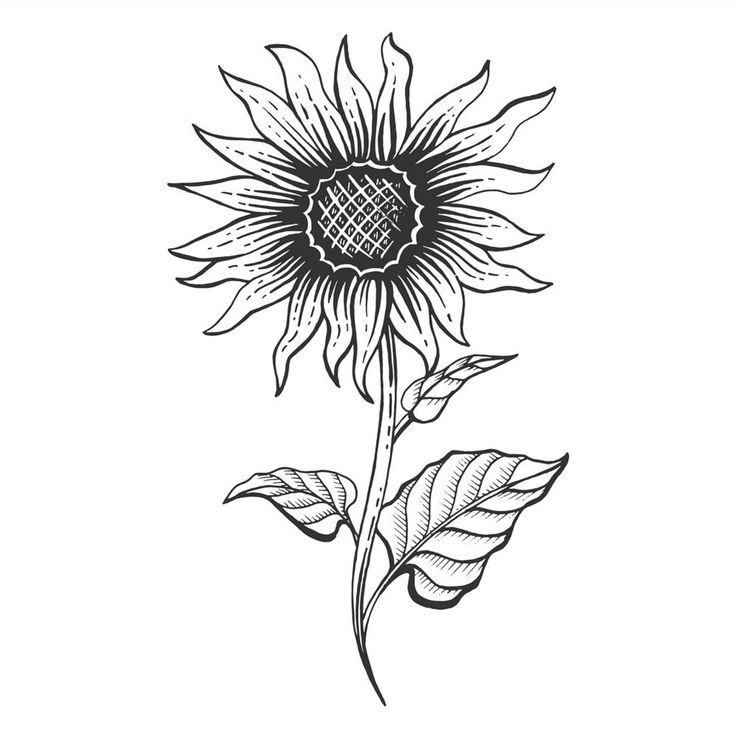 how to draw sunflowers big image sunflower line drawing png transparent png to sunflowers draw how