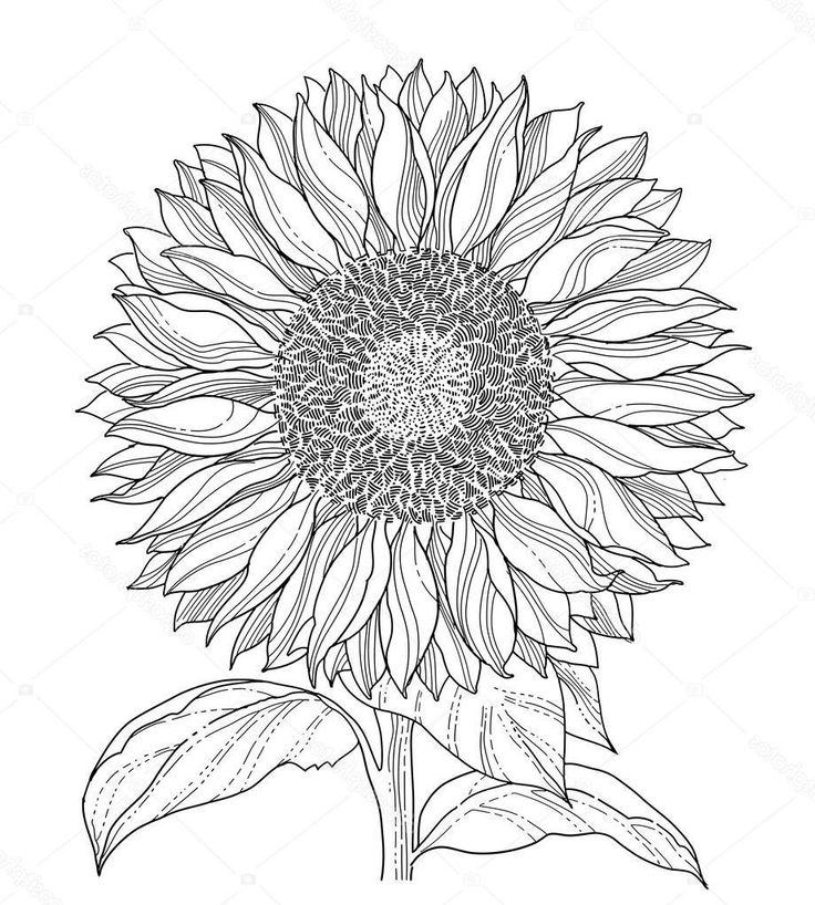 how to draw sunflowers how to draw a sunflower easy step by step drawing guides how draw sunflowers to