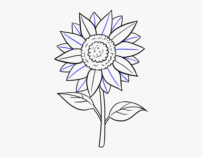 how to draw sunflowers simple sunflower drawing at getdrawings free download sunflowers draw to how