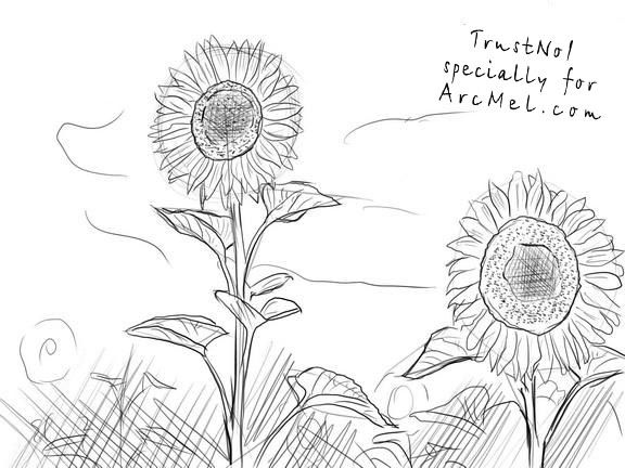 how to draw sunflowers sunflower drawing for kid free download on clipartmag how sunflowers draw to