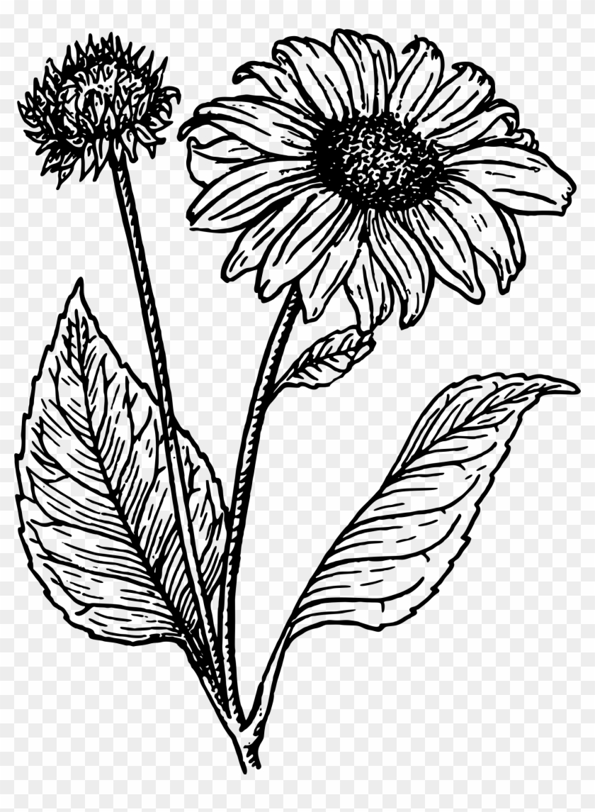 how to draw sunflowers sunflower drawing simple at getdrawings free download draw to sunflowers how