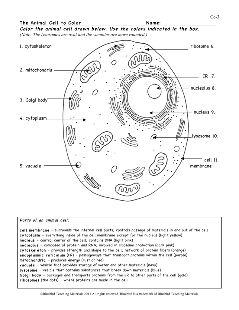 human cell worksheet plant cell diagram worksheet homeschooldressagecom human worksheet cell
