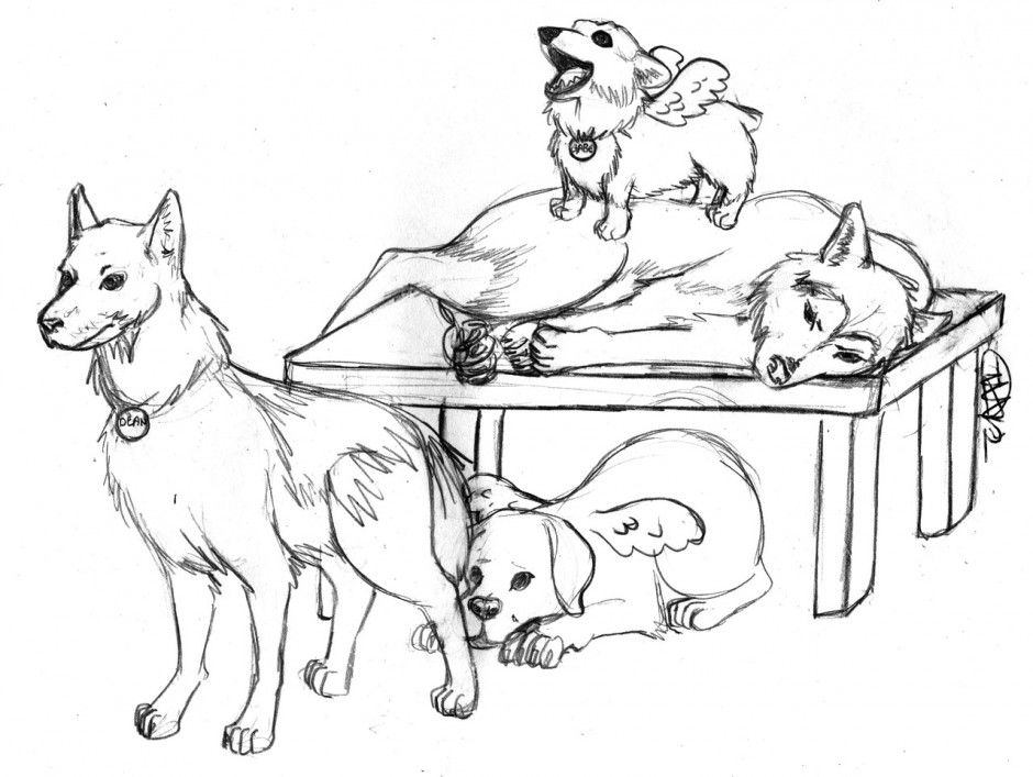 husky dog coloring pages cute husky coloring pages at getcoloringscom free husky pages coloring dog