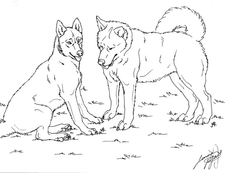husky dog coloring pages cute husky coloring pages gambar dog husky pages coloring