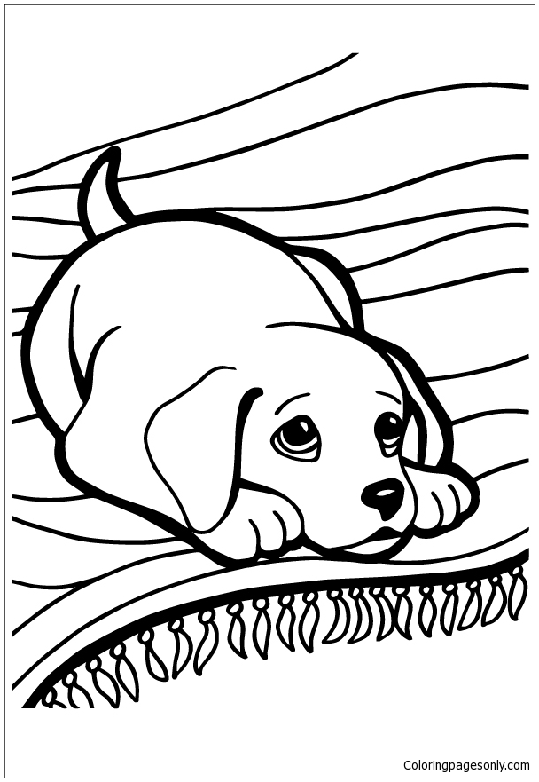 husky dog coloring pages husky coloring page free pet parade coloring pages pages husky dog coloring
