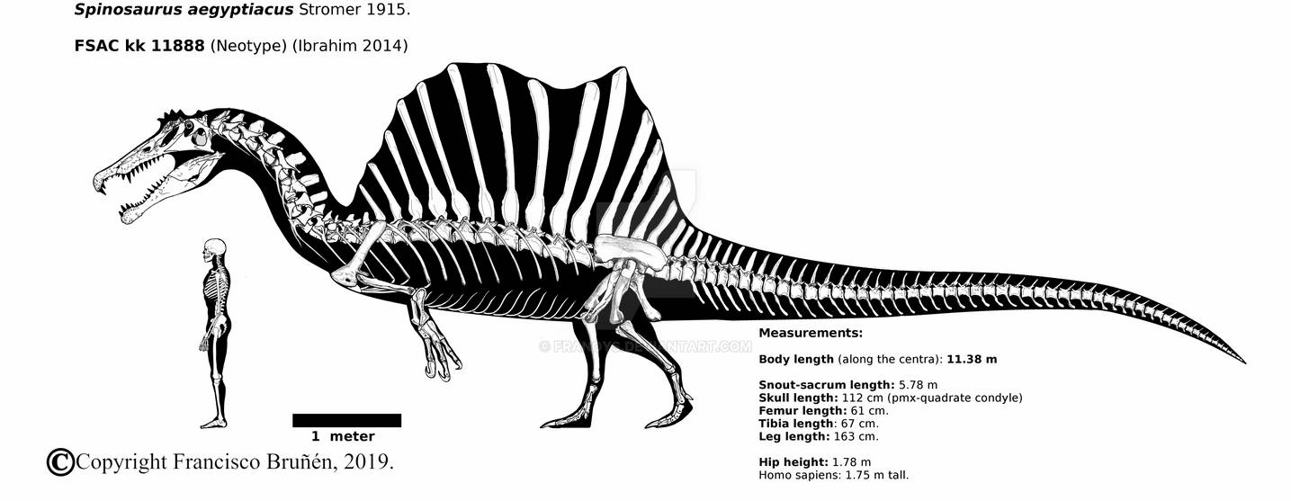 images spinosaurus spinosaurus may have been the worlds largest carnosaur images spinosaurus