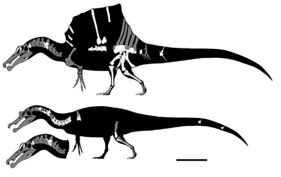 images spinosaurus spinosaurus news spinosaurus images
