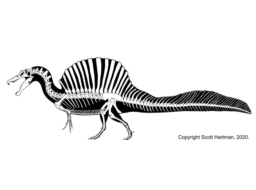 images spinosaurus the best free spinosaurus drawing images download from 82 spinosaurus images