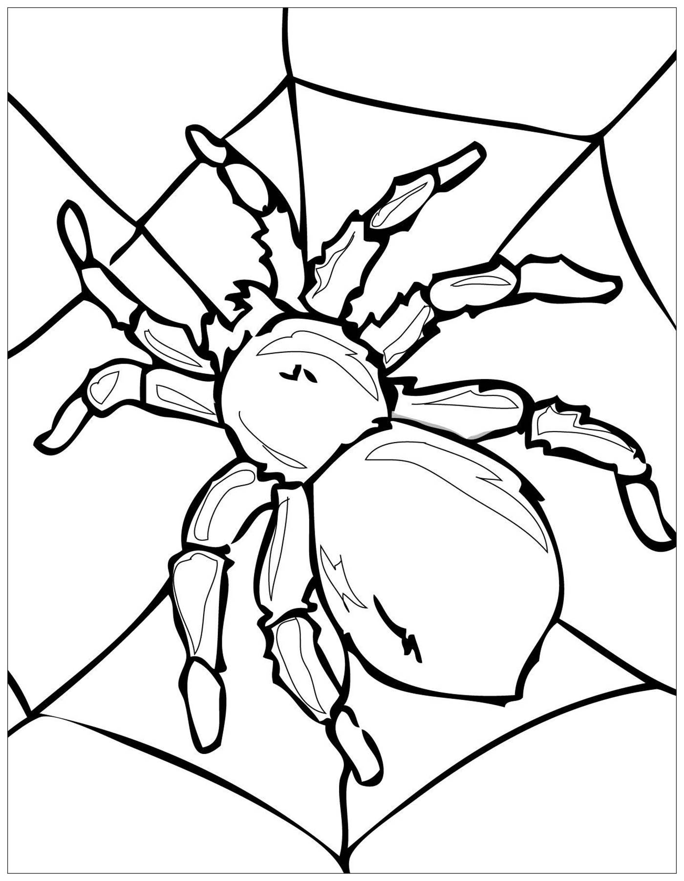 insect coloring sheets bug coloring pages kidsuki sheets insect coloring