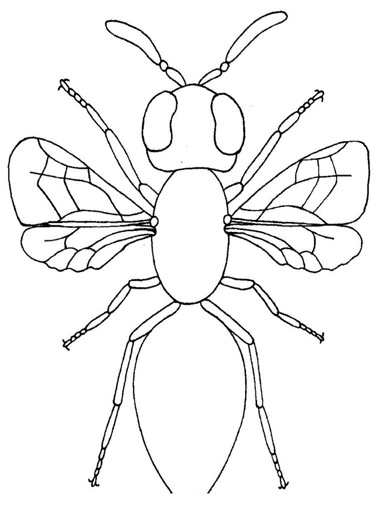 insect coloring sheets insect coloring pages to download and print for free sheets insect coloring