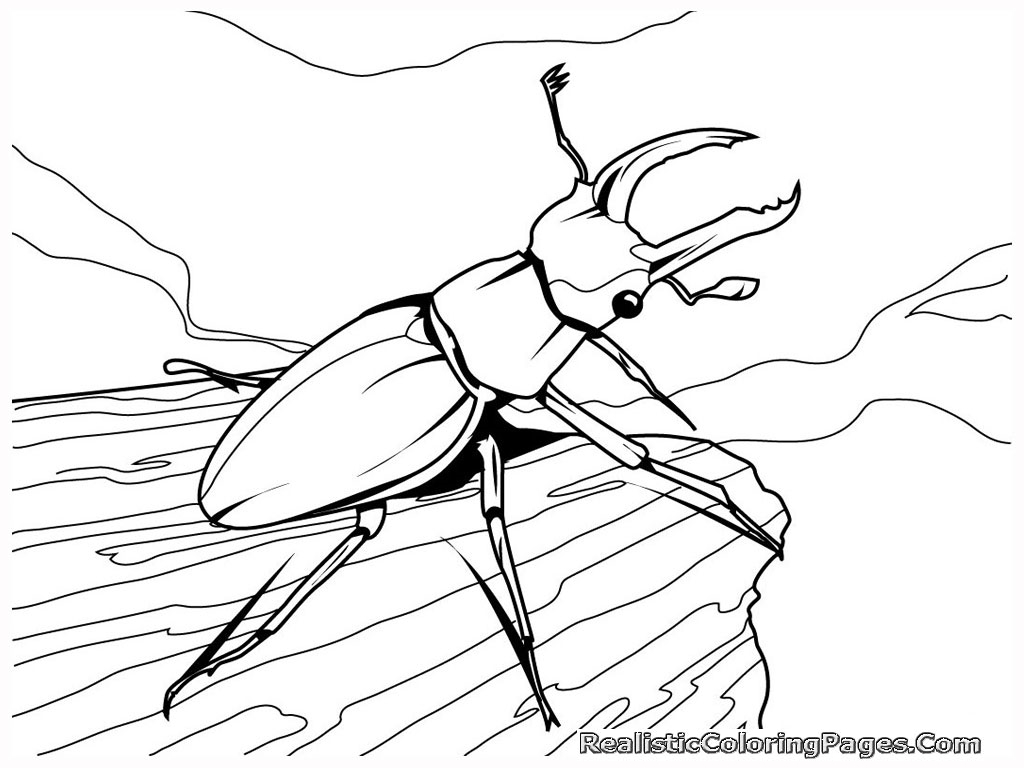 insect coloring sheets wildlife coloring pages for kids sheets insect coloring