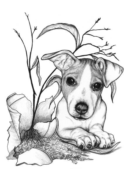 jack russel drawing 37 best dog sketches images on pinterest drawings russel jack drawing