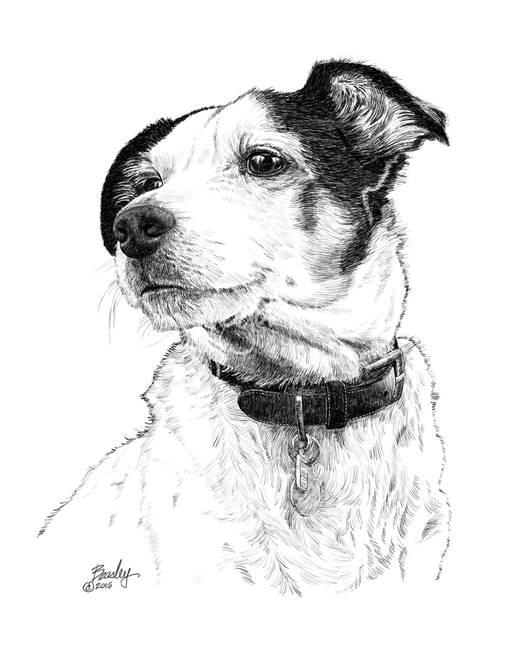 jack russel drawing 63a2 isaac the jack russell drawspace russel drawing jack