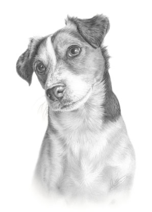 jack russel drawing commission jack russell terrier by captured in pencil on jack drawing russel