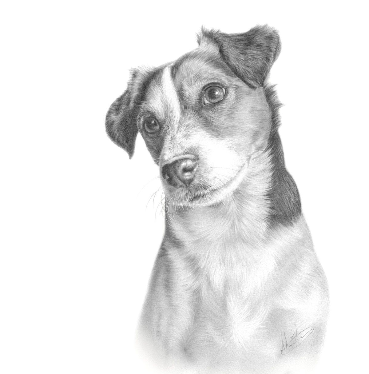 jack russel drawing commission jack russell terrier by captured in pencil on jack russel drawing