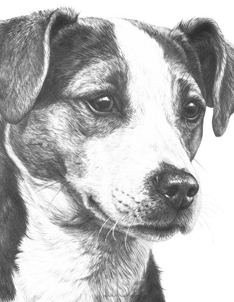 jack russel drawing dog jack russell terrier pencil drawing print a3 a4 drawing russel jack
