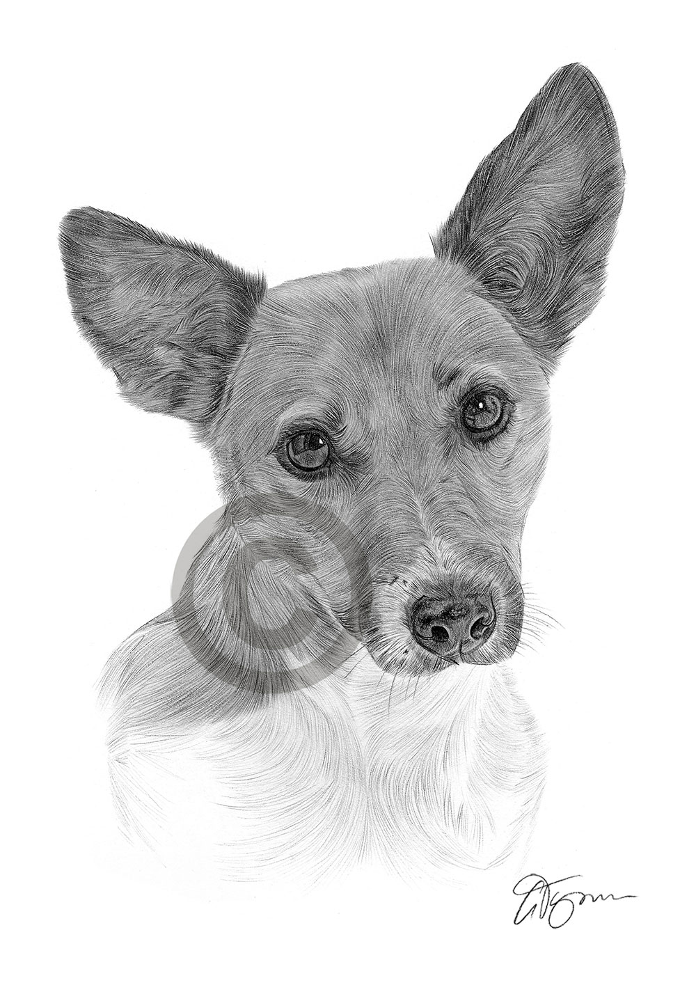 jack russel drawing jack russell dog pencil by frozenpinky on deviantart russel jack drawing