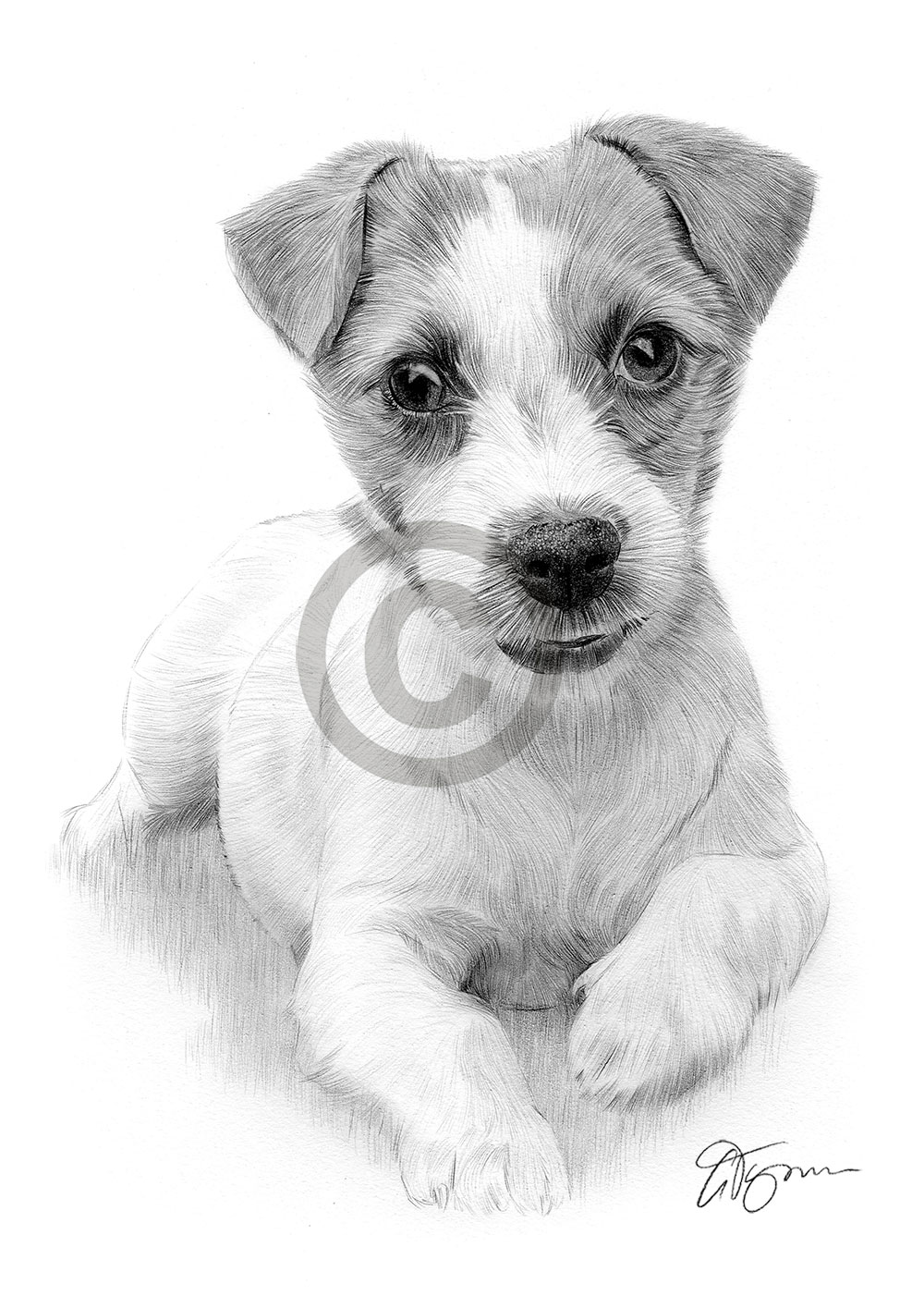 jack russel drawing jack russell drawing at getdrawings free download drawing jack russel