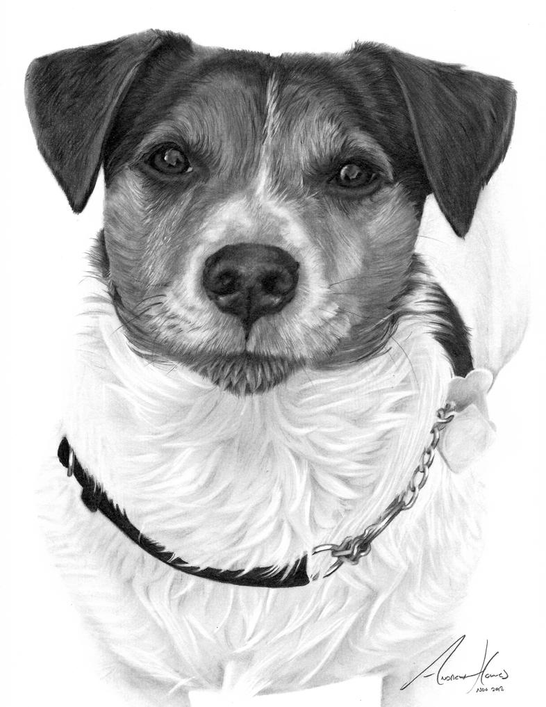 jack russel drawing jack russell graphite pencil drawing custom pet portrait drawing jack russel
