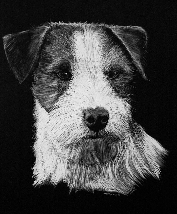 jack russel drawing jack russell puppy dog pencil drawing art print a3 a4 drawing jack russel
