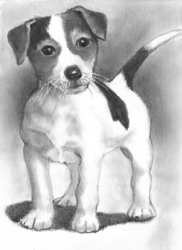 jack russel drawing jack russell puppy pencil drawing art print a4 only signed drawing russel jack