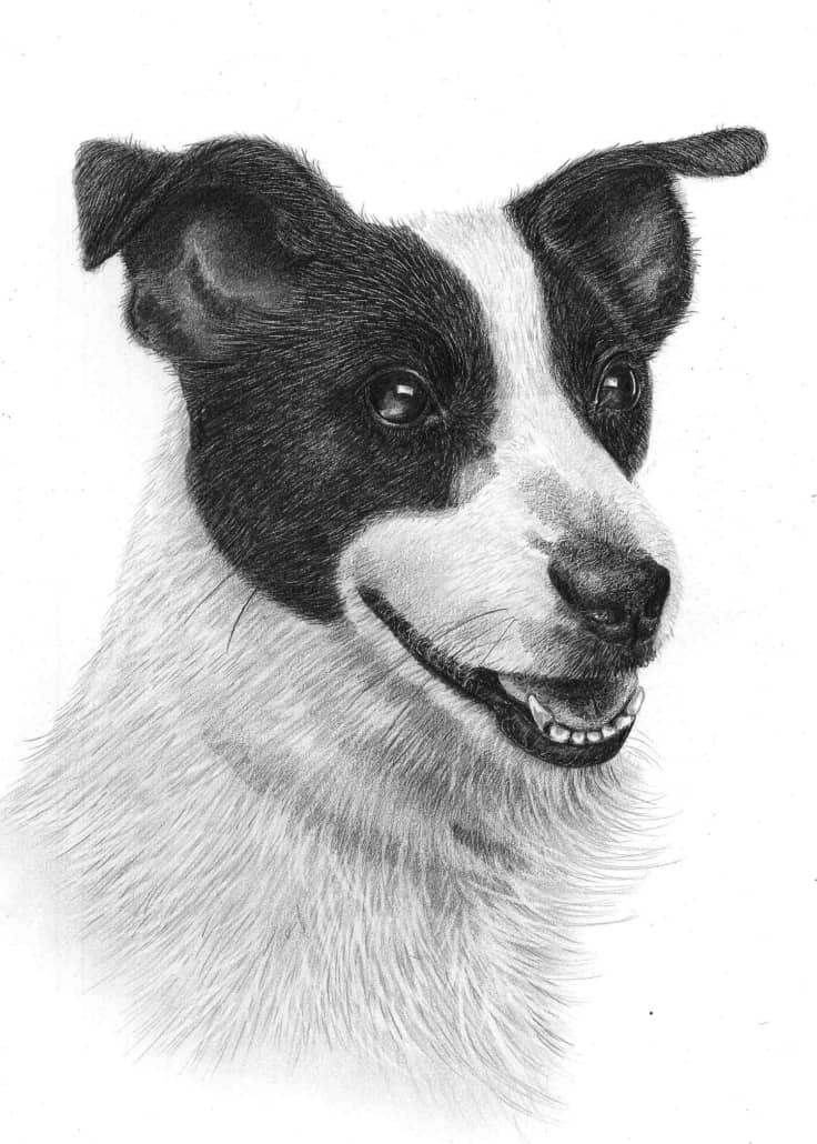 jack russel drawing jack russell terrier giclee print by mike sibley russel drawing jack