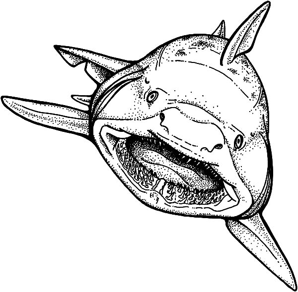 jaws coloring pages hideous long and sharp jaws coloring pages best place to coloring pages jaws