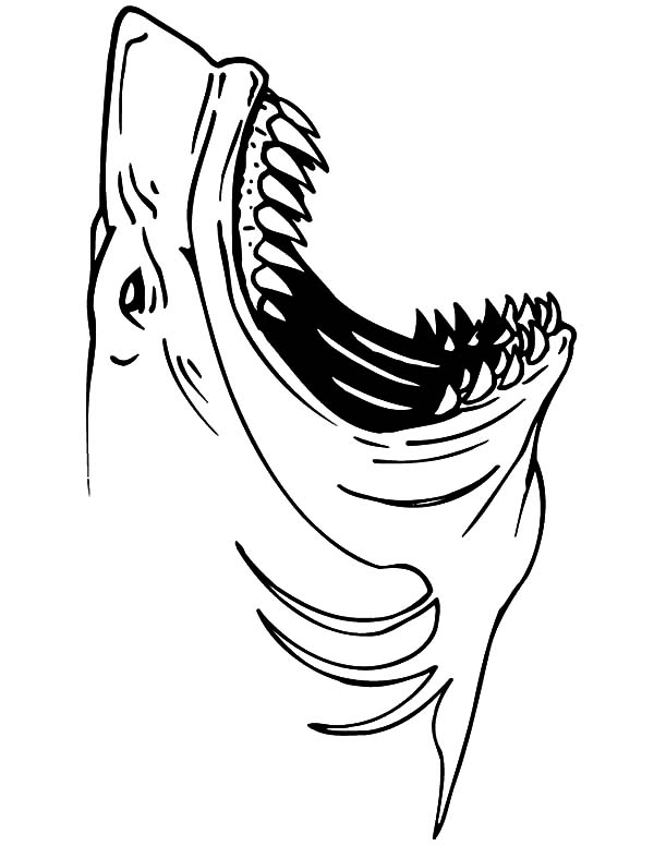 jaws coloring pages hideous long and sharp jaws coloring pages best place to coloring pages jaws 1 1