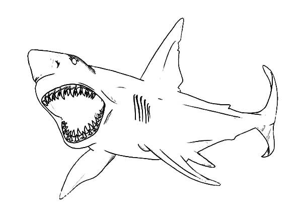 jaws coloring pages jaws free coloring pages coloring pages jaws