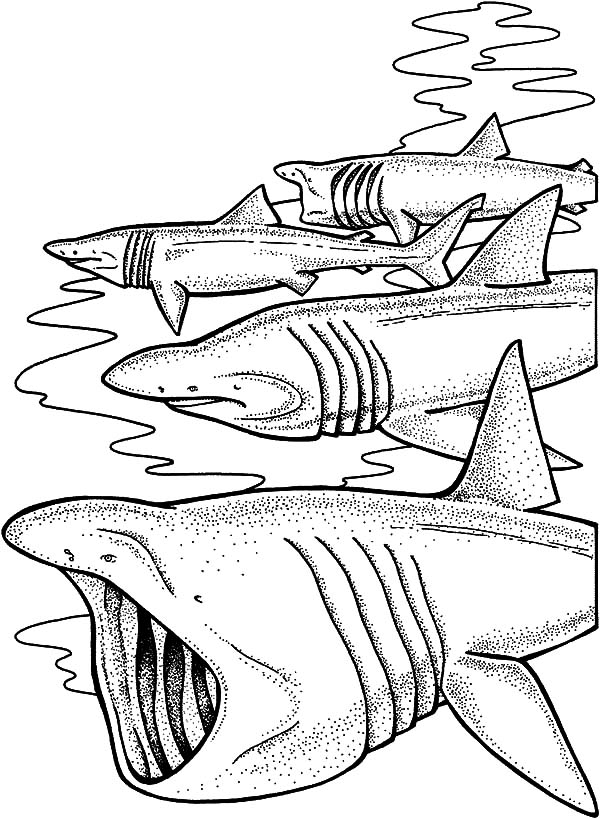 jaws coloring pages jaws the movie coloring page coloring pages jaws coloring pages