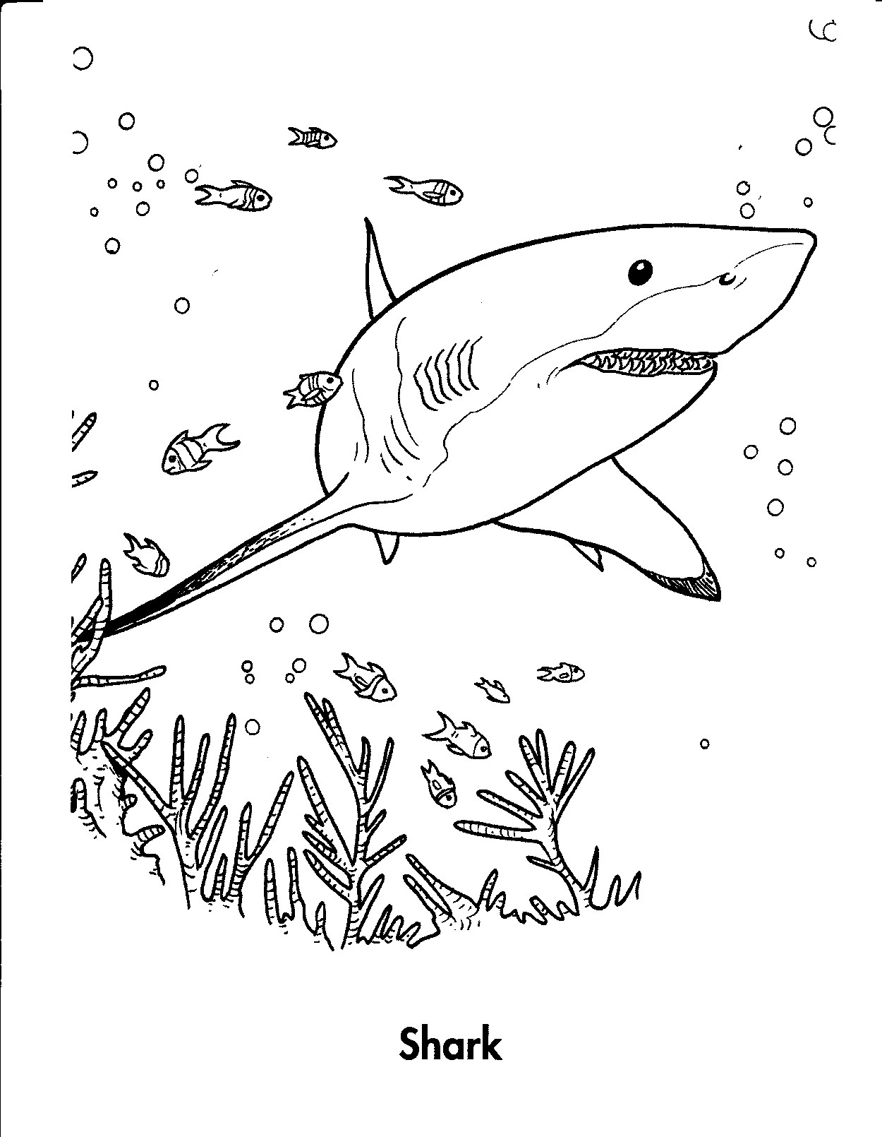 jaws coloring pages shark jaws adult coloring book by bengardnersboat on etsy coloring jaws pages 1 1