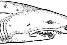 jaws coloring pages shark jaws sketch coloring pages best place to color pages coloring jaws