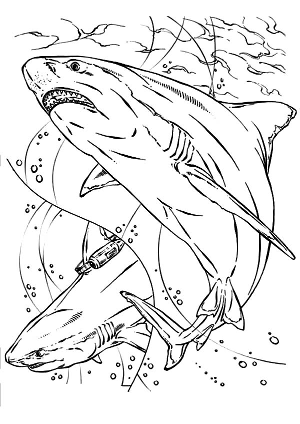 jaws coloring pages sketch of jaws coloring pages best place to color jaws coloring pages