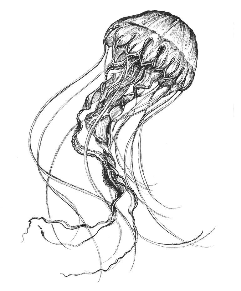 jelly fish drawings hand drawn jellyfish set sea collection stock illustration jelly fish drawings
