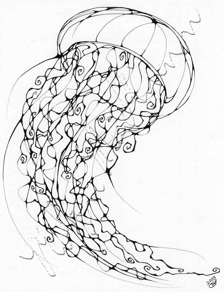 jelly fish drawings jellyfish drawing by lillian palmbach saatchi art fish jelly drawings
