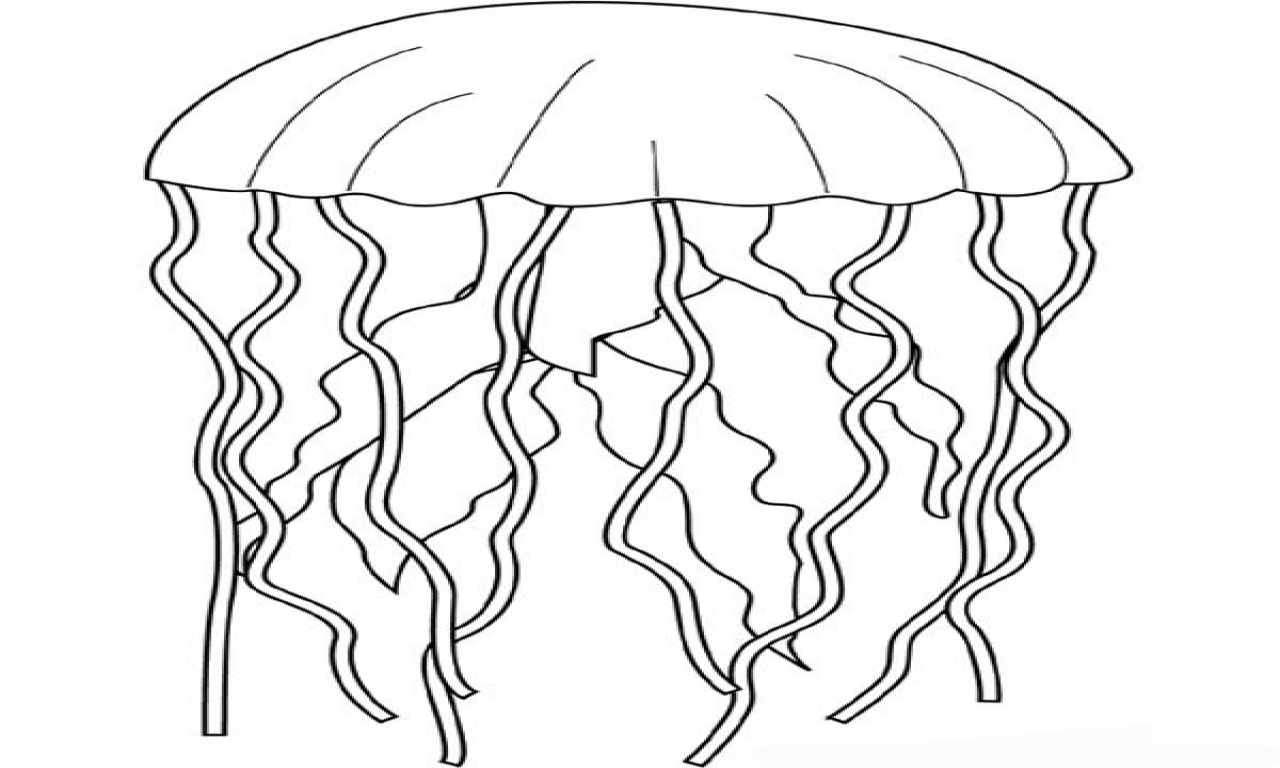 jelly fish drawings jellyfish line drawing at getdrawings free download drawings fish jelly