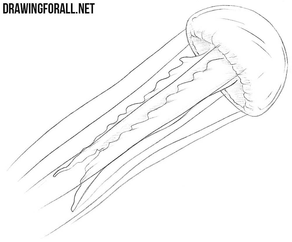 jelly fish drawings jellyfish tattoo drawing free download on clipartmag drawings fish jelly